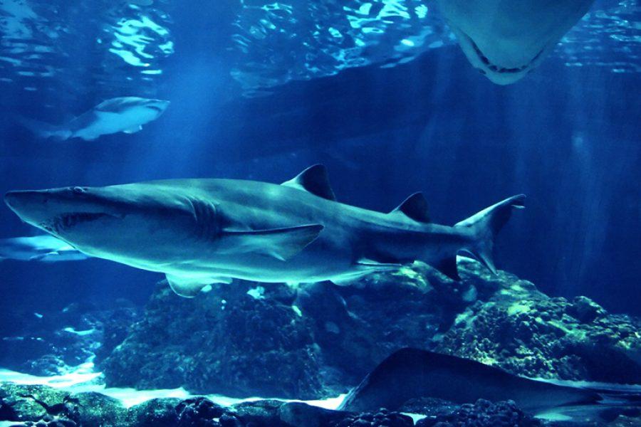 Teaserfilm & Pressekonferenz via Haifischbecken